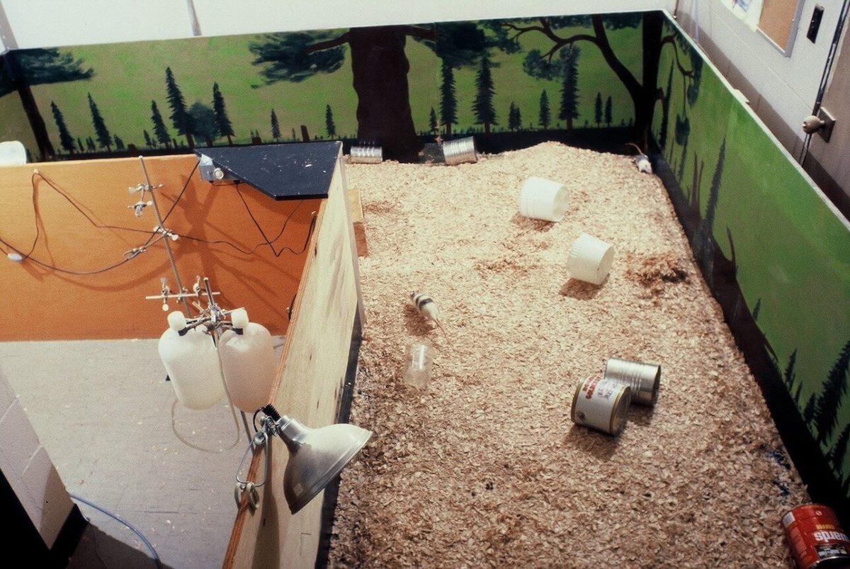 薬物依存実験で使われたラットパーク