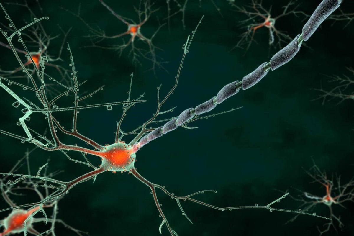 脳に作用する構造